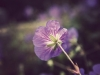 purpleflower_vintage